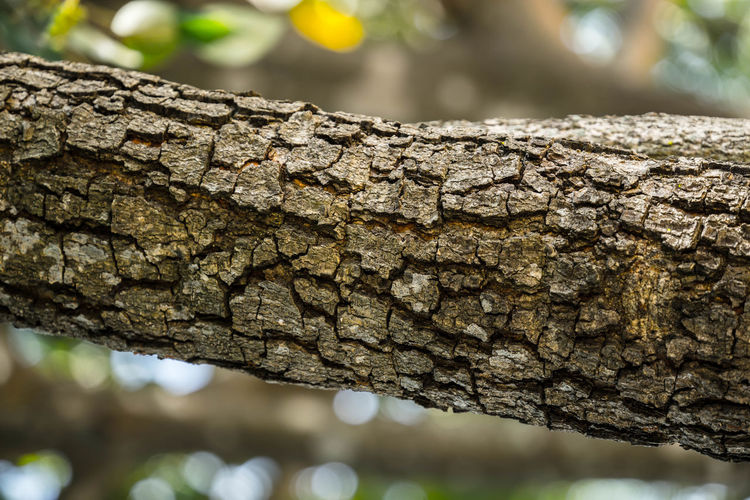 Close-up of tree trunk against blurred background