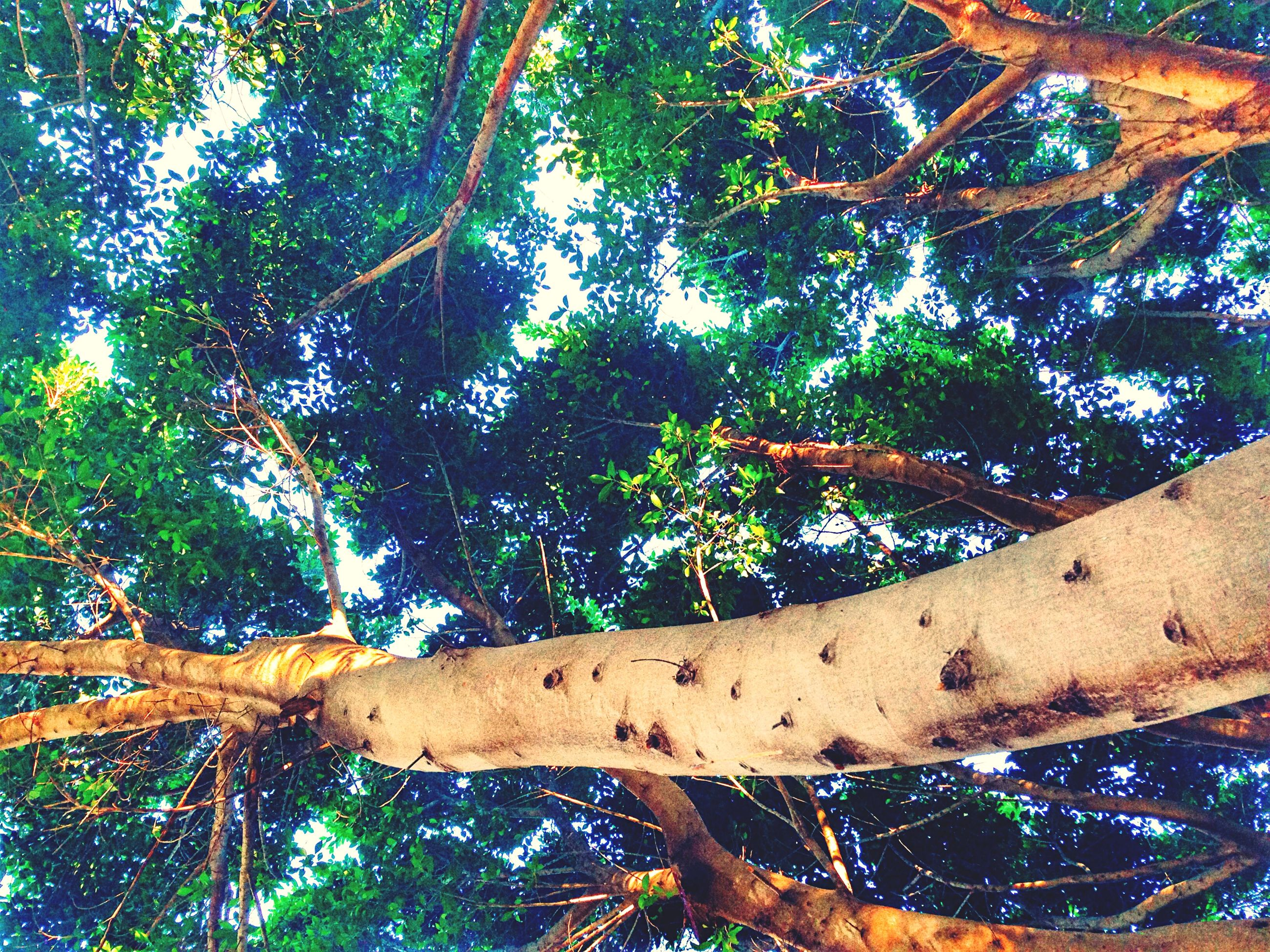 tree, branch, growth, nature, low angle view, tree trunk, tranquility, green color, wood - material, day, beauty in nature, forest, outdoors, no people, sunlight, built structure, scenics, water, blue, tranquil scene