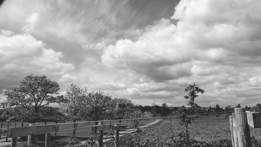 Blackandwhite Cloud Porn Black & White TreePorn Countryside Peaceful