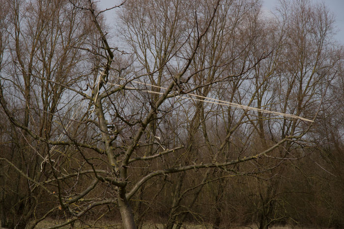 May be, Spring is coming… Agriculture Photography Apple Tree Bare Tree Beauty In Nature Branch Day Growth Low Angle View Nature Nature No People Outdoors Tranquility Tree