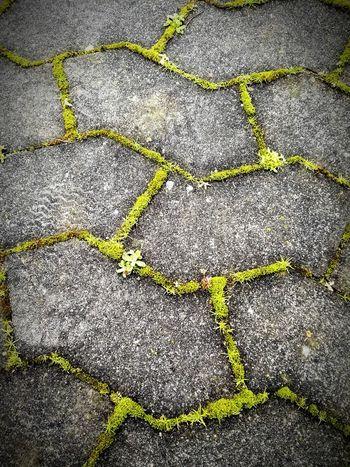 Dänemark Danmark Denmark Avifauna Grau Gra Grey Grün Grøn Green Vormittag Morgen Morning Moos Mos Moss April 2016 Pic Picoftheday Instapic Instalike Kollund Stein Sten Stone