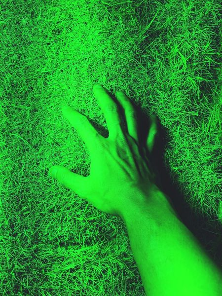 Hand Green Color Green Background Plant Agriculture Human Hand