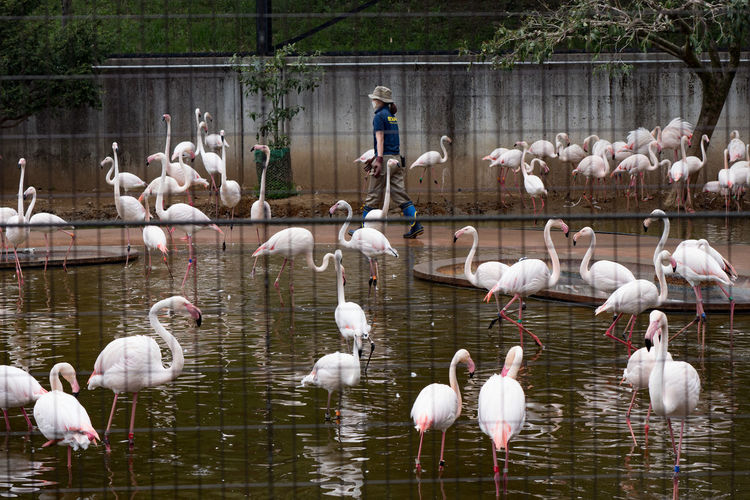 Animal Animal Themes Animal Wildlife Animals In The Wild Bird Colony Day Flamingo Nature No People Outdoors Phoenicopterus Water Zoo