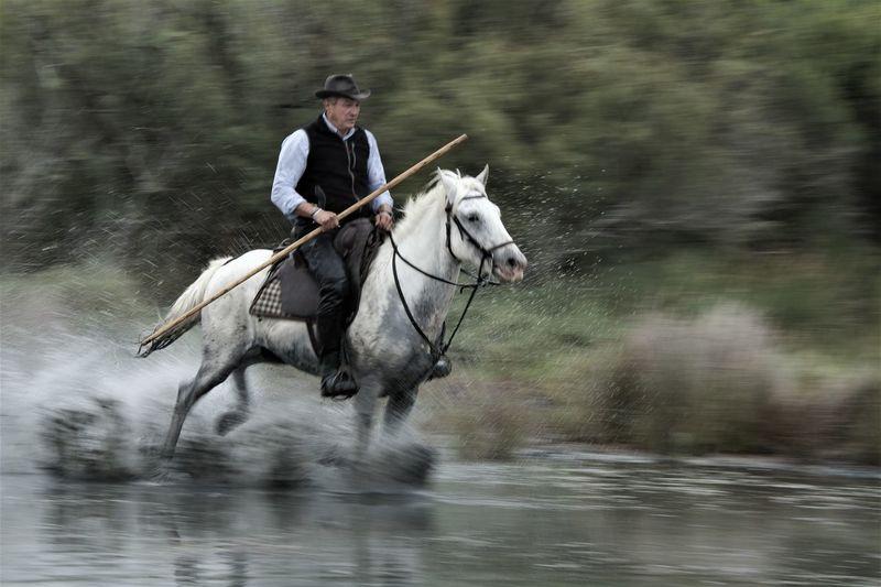 Man riding horse in lake