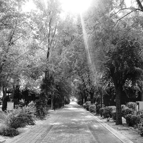 Road ahead...