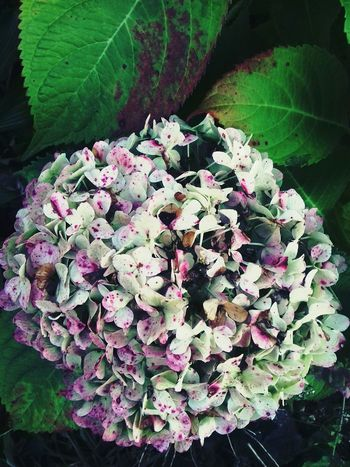 Flower Flower Freshness Fragility Growth Beauty In Nature Close-up Plant Springtime Nature Leaf Pink Color In Bloom Petal Selective Focus Blossom Botany Flower Head Green Color Hydrangea Day