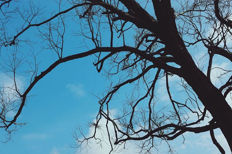 Cloud - Sky Blue Dry Branches Die Tree Low Angle View Plant Sky Branch Beauty In Nature Nature Silhouette