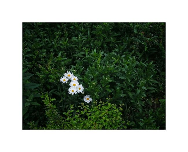 Flower Summer