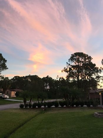 Tree Plant Sky Sunset Cloud - Sky Nature Beauty In Nature Scenics - Nature Grass Silhouette Growth Tranquility No People Outdoors Environment