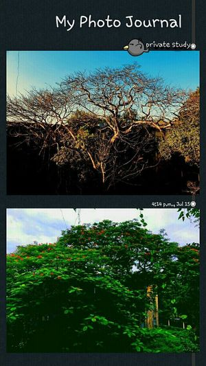 circle of life never ends🌱🌳💚 Treelife Green Unilife Seasons Seasonal Photography Summer Moonsoon Rainy Days Backtolife Beauty In Nature Eyem Nature Lovers  Throwback Myhistory Collage HostelLife Meaning Of Life Eyeemphotography Tree Sky Close-up Plant Blooming Calm