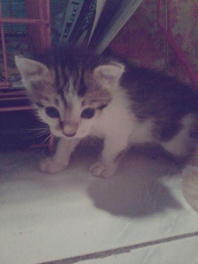 My Kitten My Love Cat