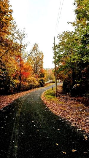 Autumn Tree Grass Outdoors No People Day Nature Sky Road Beauty In Nature