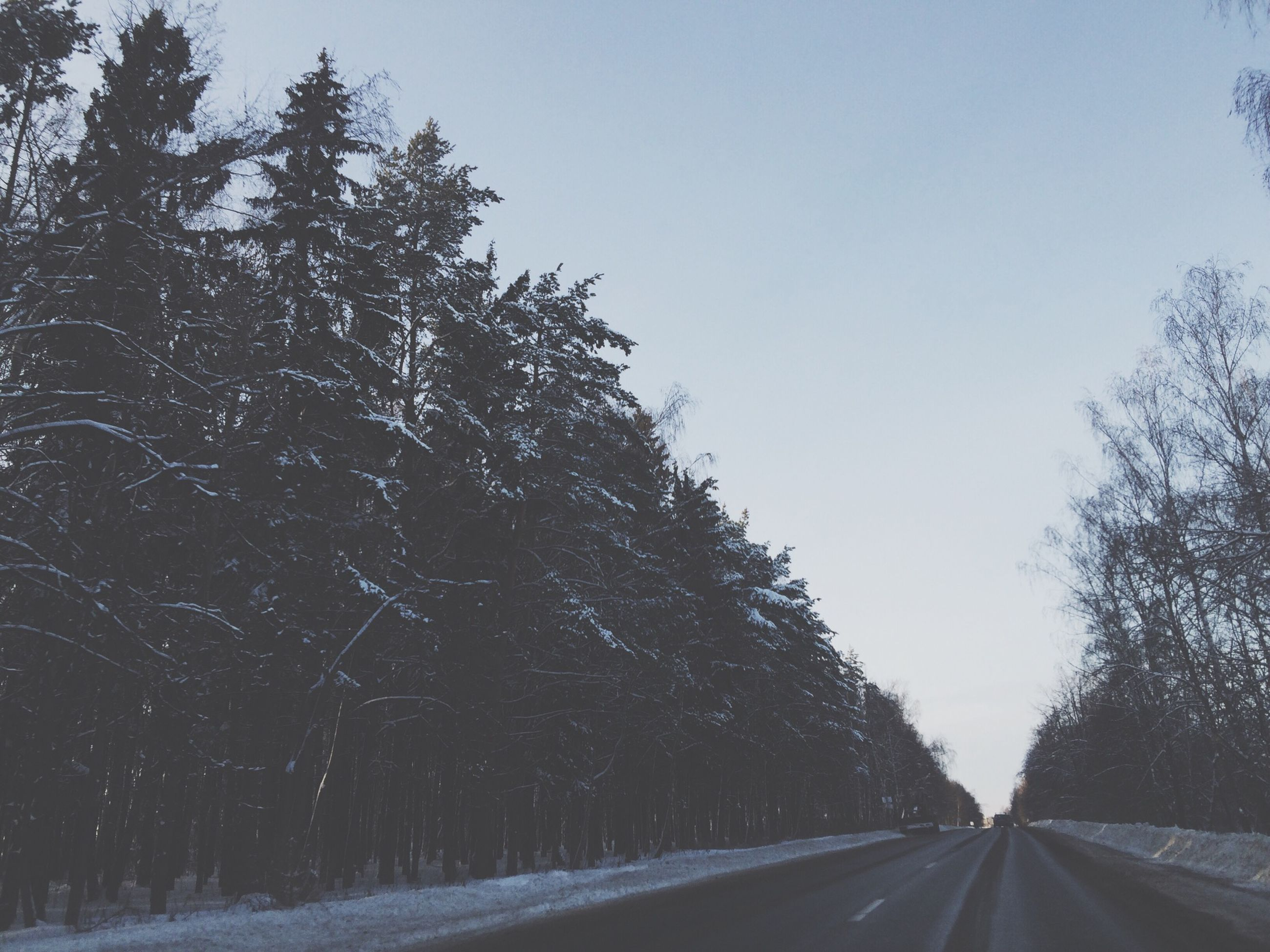 the way forward, tree, road, transportation, diminishing perspective, clear sky, vanishing point, empty road, sky, road marking, nature, tranquility, country road, tranquil scene, street, winter, copy space, snow, outdoors, long