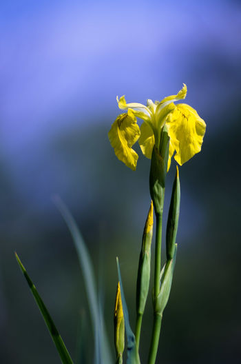 Beauty In Nature Blooming Close-up Day Flower Flower Head Focus On Foreground Fragility Freshness Growth Nature No People Outdoors Petal Plant Yellow