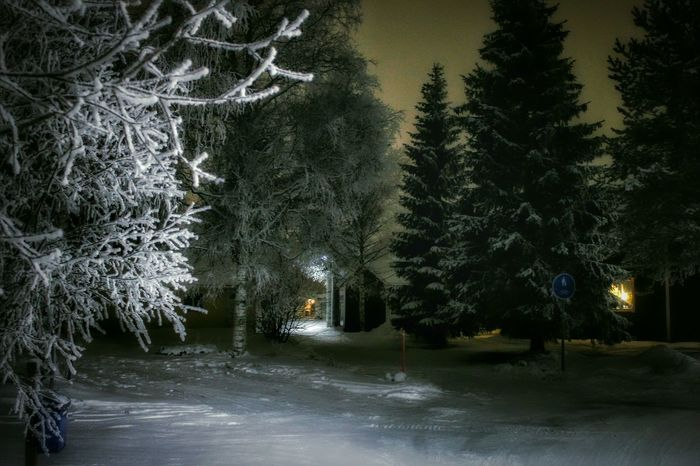Evening Walk Walk Winter Night Night Nightphotography Walking Path White Frosty Branches Frozen Nature Frosty Frost Snow ❄ Darkness And Light Light And Shadow Beauty Beautiful Winter Beauty  Winter Wonderland Wintertime Winter Popular Photos Popular Copy Space Sweden Europe