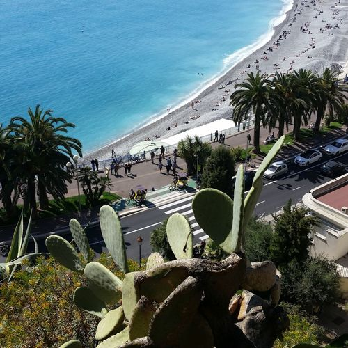 High Angle View Of Cactus Against Nice Seashore