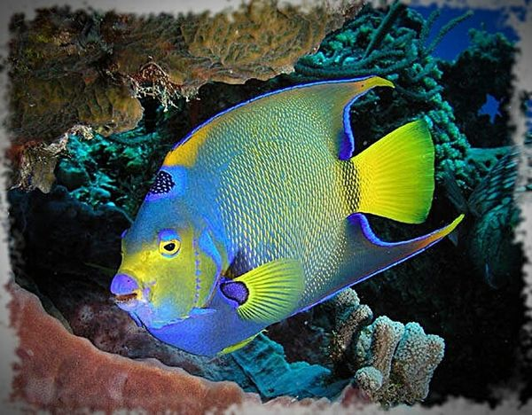Underwater UnderSea Fish Sea Animal Wildlife Sea Life Multi Colored Animals In The Wild One Animal Coral No People Day Nature Animal Themes Close-up Outdoors