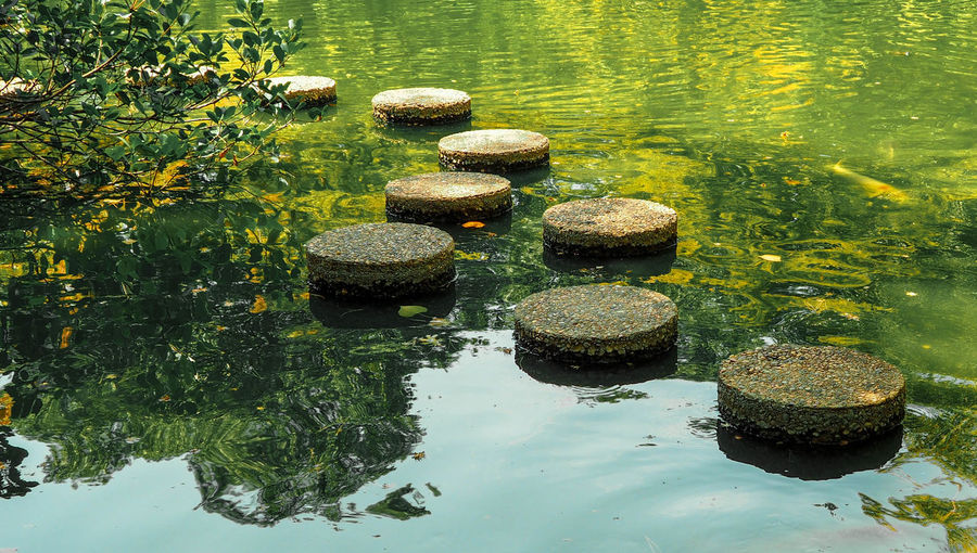 Koi Korea Pond Beauty In Nature Day Green Color Growth Japanese Garden Lake Nature No People Outdoors Plant Portrait Reflection Rock Solid Stepping Stone Stone Stone - Object Tranquility Water