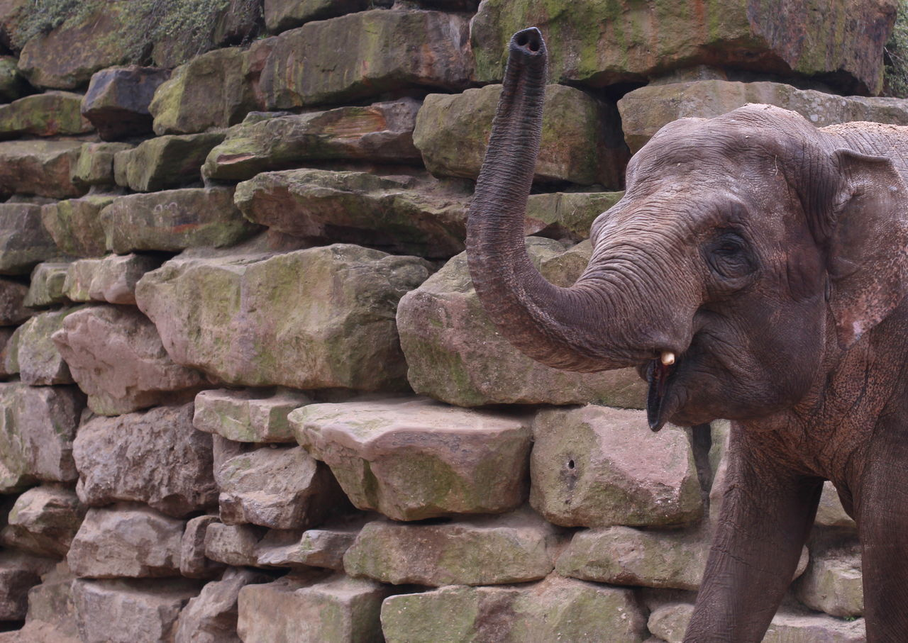 one animal, animal themes, day, no people, outdoors, elephant, animals in the wild, mammal, animal wildlife, nature, close-up