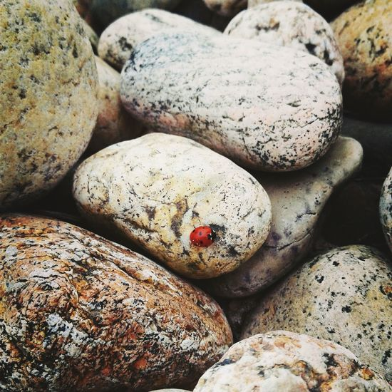 Rock - Object Outdoors Animal Themes Nature Ladybug🐞 Stones Beauty In Nature Close-up First Eyeem Photo