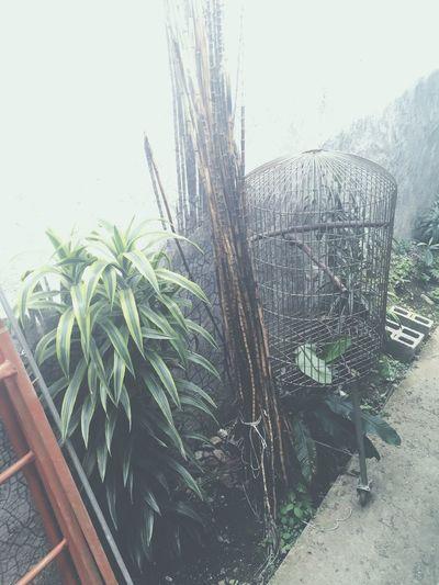 Random Boring Plants School