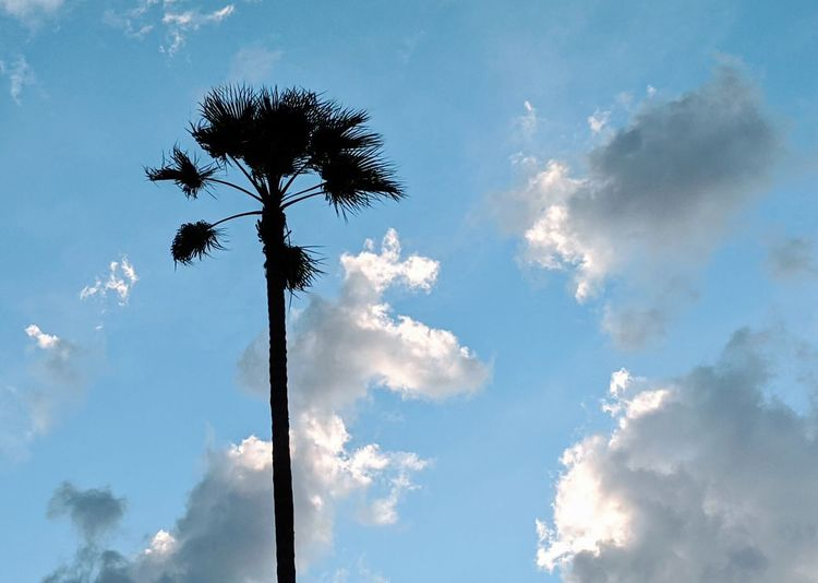 Low angle view of silhouette coconut palm tree against blue sky