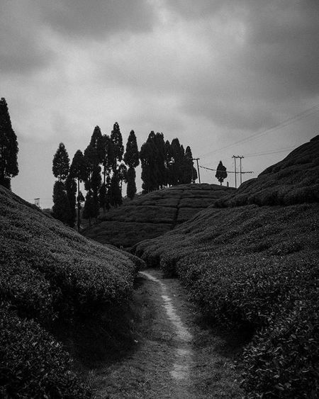Taking a walk at the Gopaldhara tea estate ! . . . . Darjeeling Tea Blackandwhite Highcontrast Moodygrams Wideangle Jj_landscapes Foto_blackwhite Amateurs_bnw Bnw_planet Bnw_rose Bnw_landscape Bnw Travel Travelingram Natgeotravel Lonelyplanetindia Ig_india Ig_bengals OnlyinIndia IndiaLove Natgeo Betterphotography Onlyinbengal Indiaphotoproject _oye mypixeldiary desi_diaries