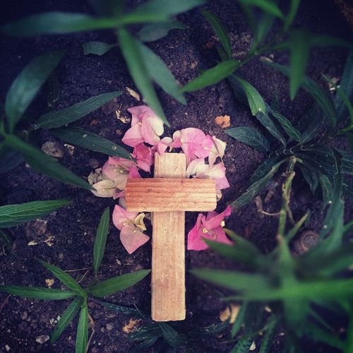 RIP Died & Gone To Heaven GodBless Flower Flower Head Spirituality High Angle View Leaf Close-up Plant Green Color
