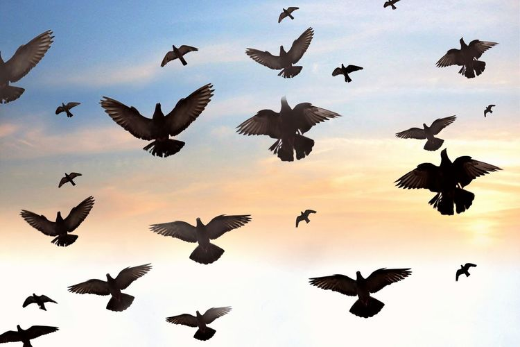Just brids Orenge Sky Blue Sky Black Wall Background Bird Spread Wings Flying Full Length Flock Of Birds Silhouette Mid-air Vulture Sky Animal Themes Crane - Bird