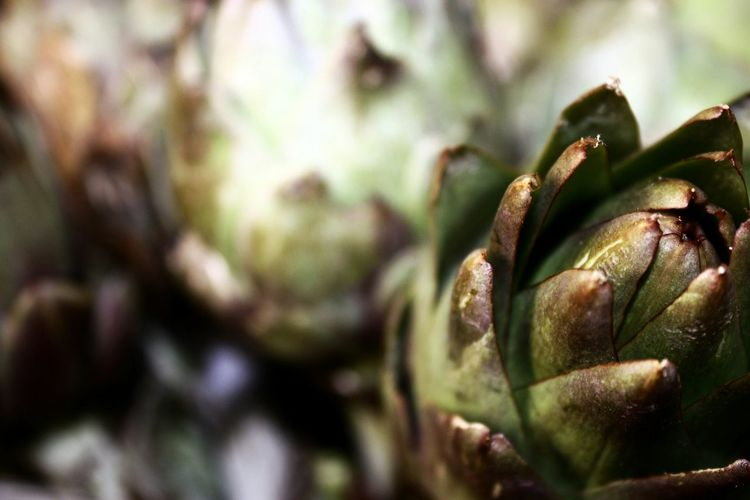 Carxofes Vegetables Learn & Shoot: Single Light Source Macro Macro Photography Nature Deceptively Simple Green Vegetables & Fruits Nature Textures Macro Beauty Nature's Diversities Focus Object Maximum Closeness