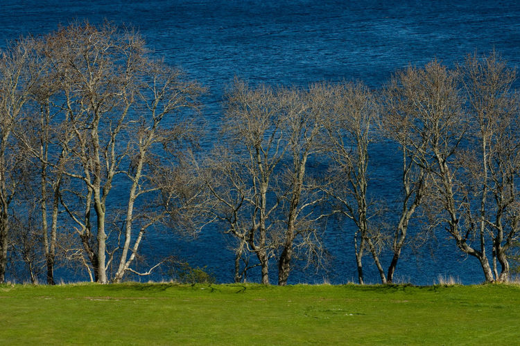 Scotland UrquhartCastle Bare Tree Beauty In Nature Blue Day Grass Loch Ness Nature No People Outdoors Plant Rural Scene Tree