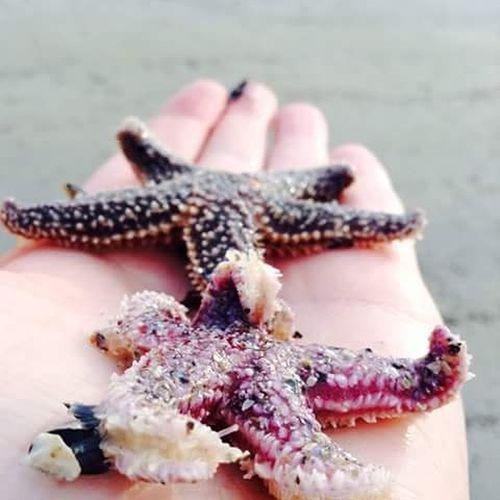 Sea stars on