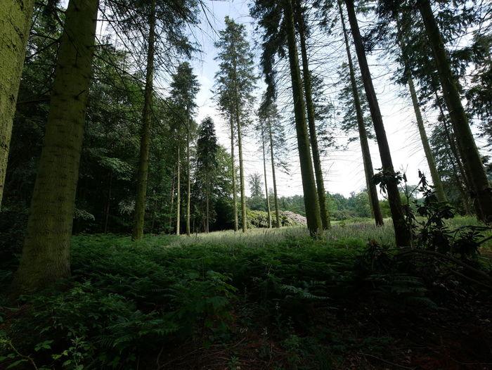 Weitwinkelige Perspektive Ultrawideangle Lumix 7-14mm Panasonic G81 Tree Tree Area Forest Tree Trunk WoodLand Sky Green Color