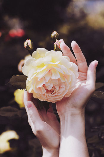 Cropped hand of person holding flower
