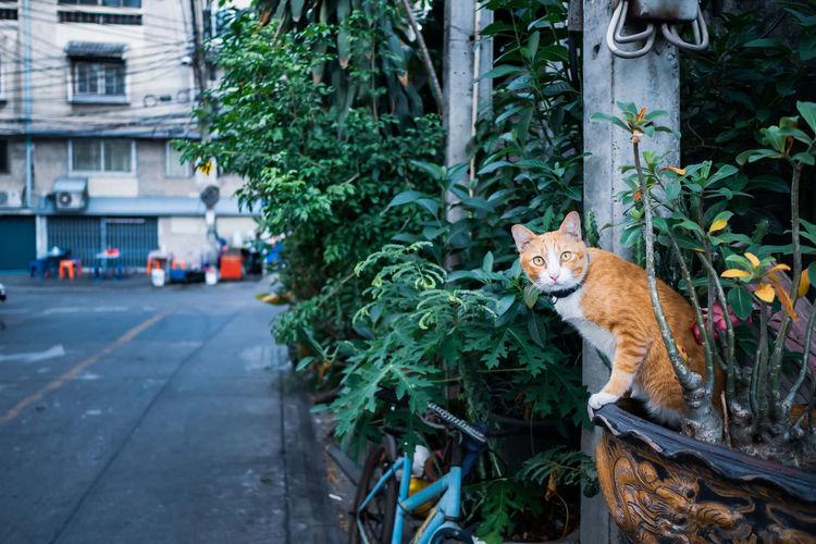 Street cat sits