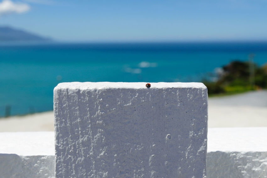 Ladybird on the fence Kaikoura Beach Blue Clear Sky Close-up Day Fence Focus On Foreground Horizon Horizon Over Water Ladybird Land Nature No People Outdoors Sea Seascape Sky Sunlight Sunny Water