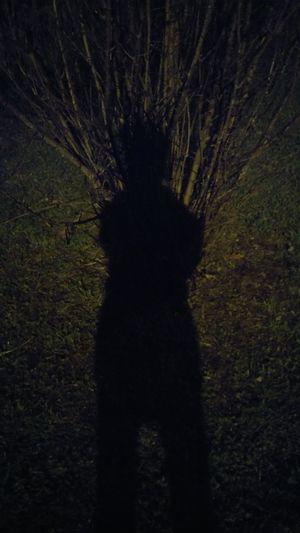 Rear view of silhouette cat on field at night