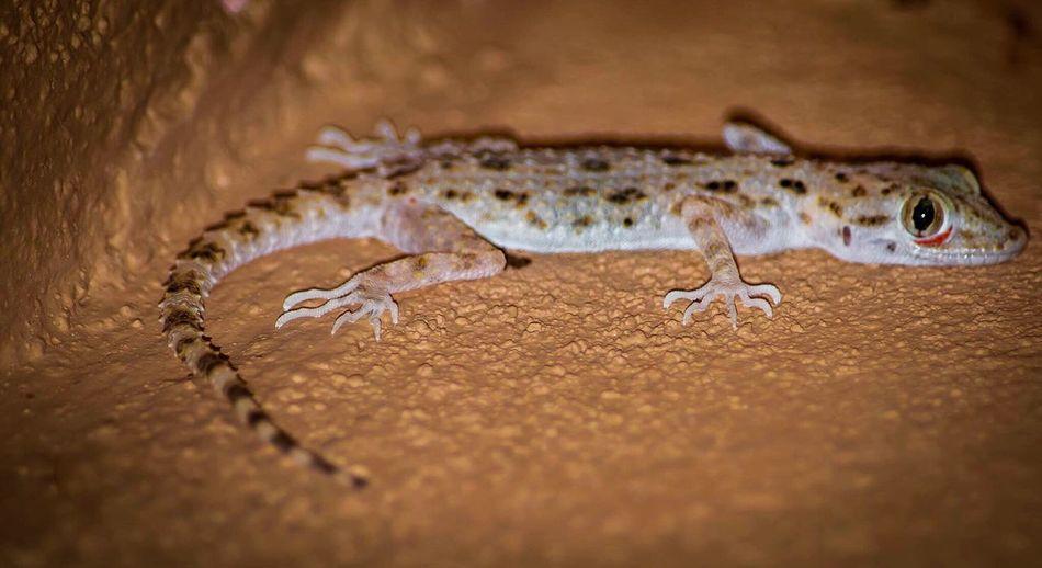 Photooftheday #photography #photograph #fotografia #foto #lizard #lizards #syoufski #f4l #l4l #animalkingdom #animals #animal #reptiles #reptile #nikon #nikonphotography #nikond3200 #nikontop #nikon_photography #nikontop_ #creepy