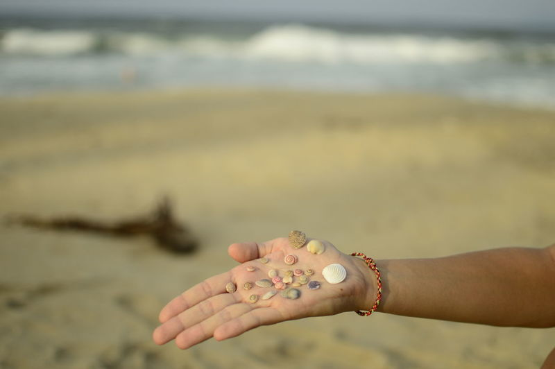 Cropped image of hand holding sea