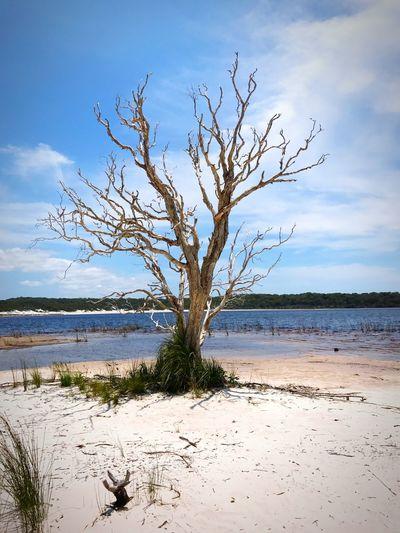 Bare tree on beach against sky
