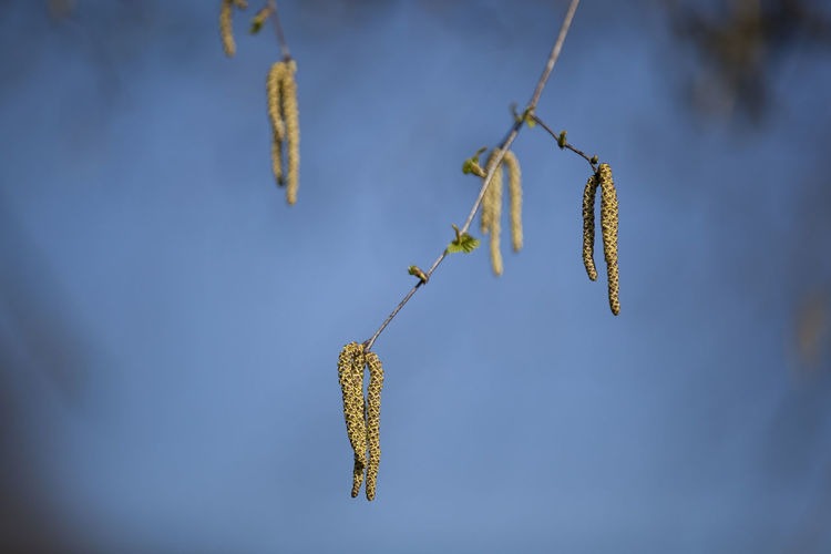 Close-up of branch hanging outdoors