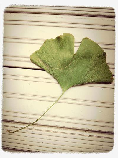 秋になるだな〜 I don't know what this leave is, but it seems to be used in Tokyo Univ symbol. Tokyo Leaves Autumn