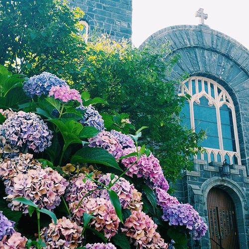 St. Mary's church in Greenwich, CT Greenwich ⛪ Hydrangeas