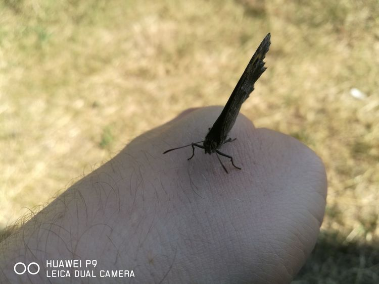 Animal Wildlife Insect One Animal Animals In The Wild Day Outdoors Nature No People Animal Themes Close-up Butterfly