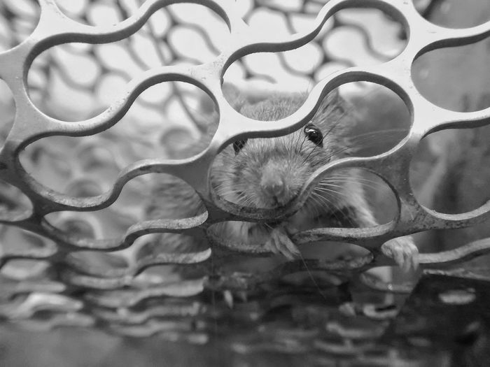 No experiments please.😷 Blackandwhite Death Mobilephotography Perspective PhonePhotography EyeEm Selects Editorial  Mice Animal Themes Animal Science And Technology Experimental Laboratory Feelings Frightened  Backgrounds Close-up Abstract Backgrounds Wave Pattern