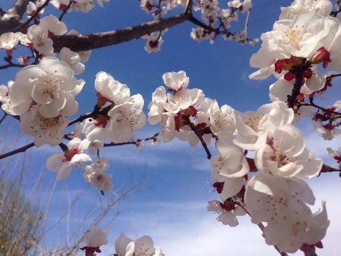 Low angle view of white blossoms against sky