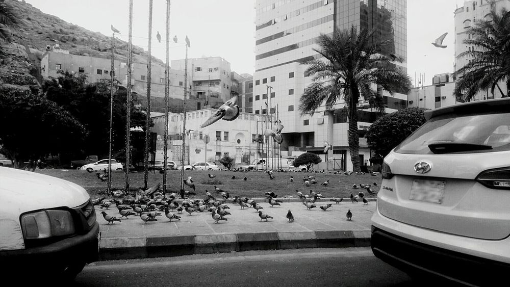 Birds Dove EyeEm Birds Landingand another Flying .. Bnw Street Traffic Lights From My WindowFrom My Point Of View