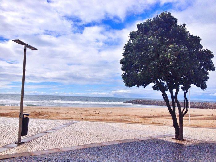 Trees on beach against sky