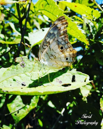 Mariposa Animals In The Wild One Animal Animal Themes Leaf Insect Green Color Close-up Nature Butterfly - Insect No People Outdoors Animal Wildlife Day Plant Growth Moth Beauty In Nature Grass Wild Animal
