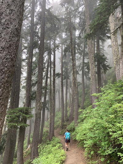 Rear view of person walking on footpath amidst trees in forest